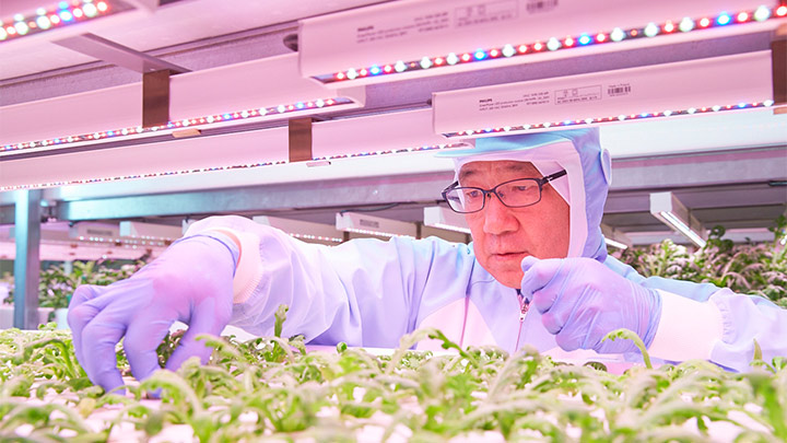 Japanese food producers harvest the benefits of vertical farming with LED lighting