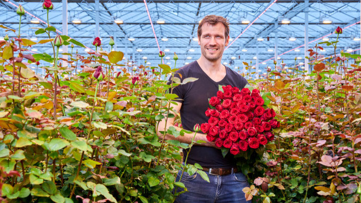 Dutch rose grower Marjoland 1