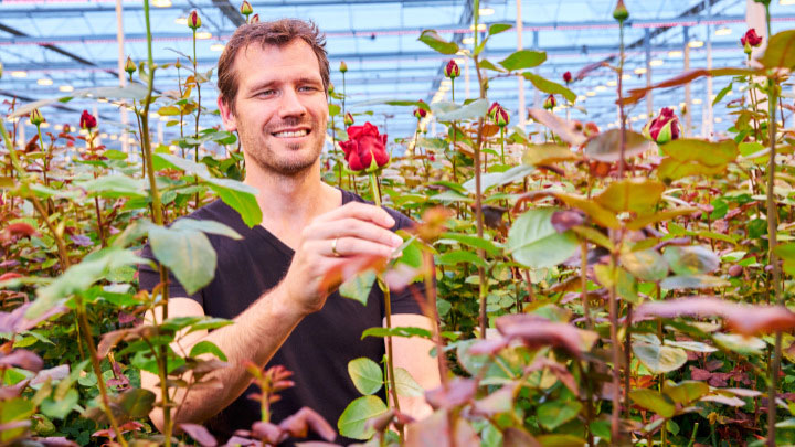 Dutch rose grower Marjoland 2