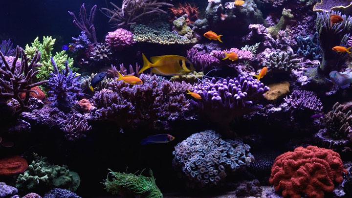 The right light for every coral reef
